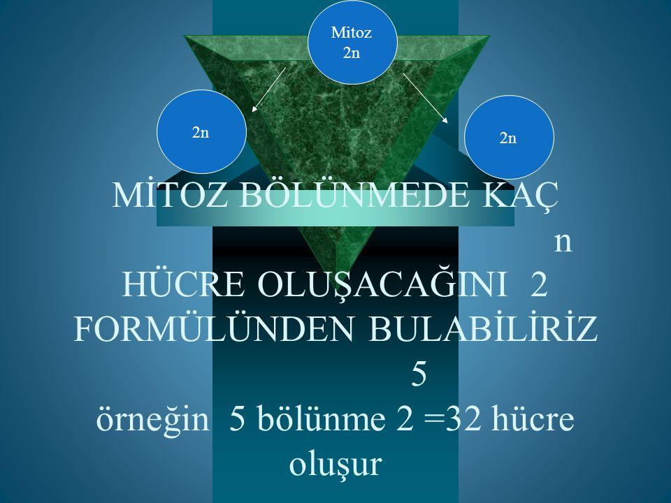 ÇÖZÜM  Birinci bölünme  İkinci bölünme  Üçüncü bölünme 2n=24