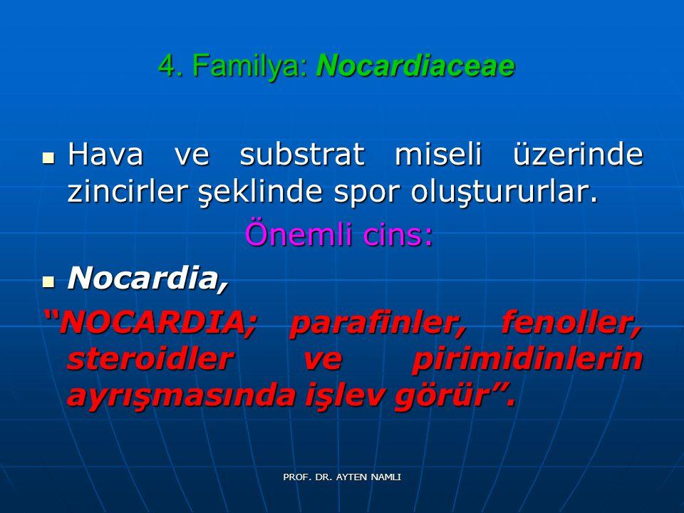 4. Familya: Nocardiaceae Hava ve substrat miseli üzerinde zincirler şeklinde spor oluştururlar. Hava ve substrat miseli üzerinde zincirler şeklinde sp