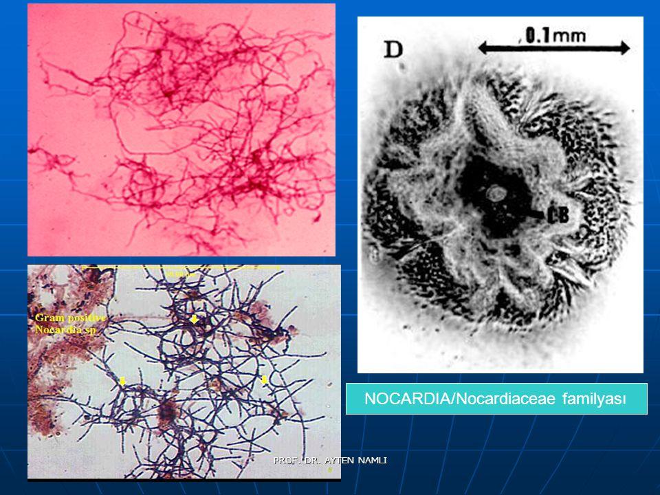 NOCARDIA/Nocardiaceae familyası PROF. DR. AYTEN NAMLI