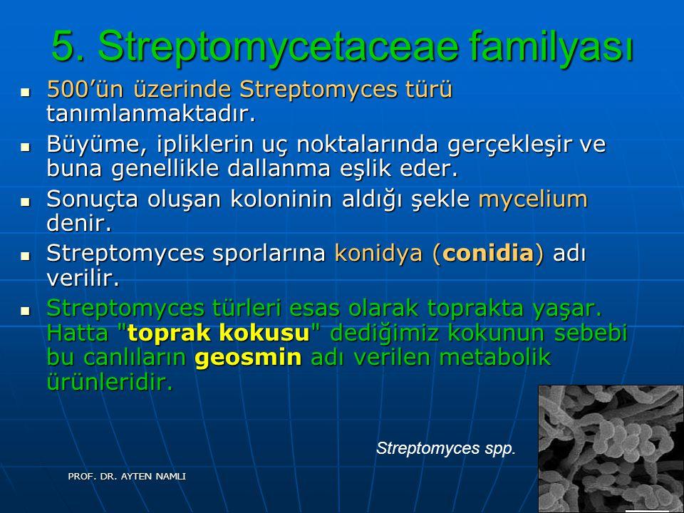 5. Streptomycetaceae familyası 500'ün üzerinde Streptomyces türü tanımlanmaktadır. 500'ün üzerinde Streptomyces türü tanımlanmaktadır. Büyüme, iplikle