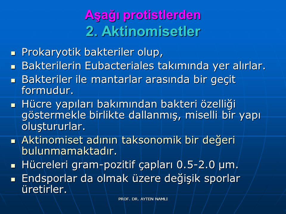 MANTARLARIN TAKSONOMİSİ 1.Phycomycetes 1.