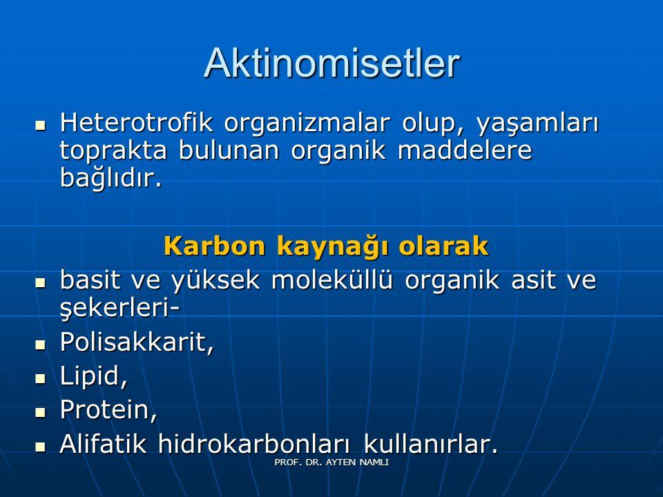 Micobacterium Tüberculosis PROF. DR. AYTEN NAMLI