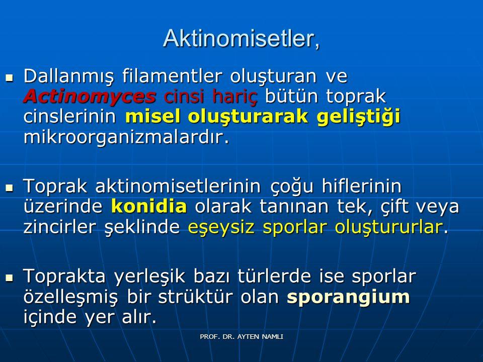 MUCOR PROF. DR. AYTEN NAMLI