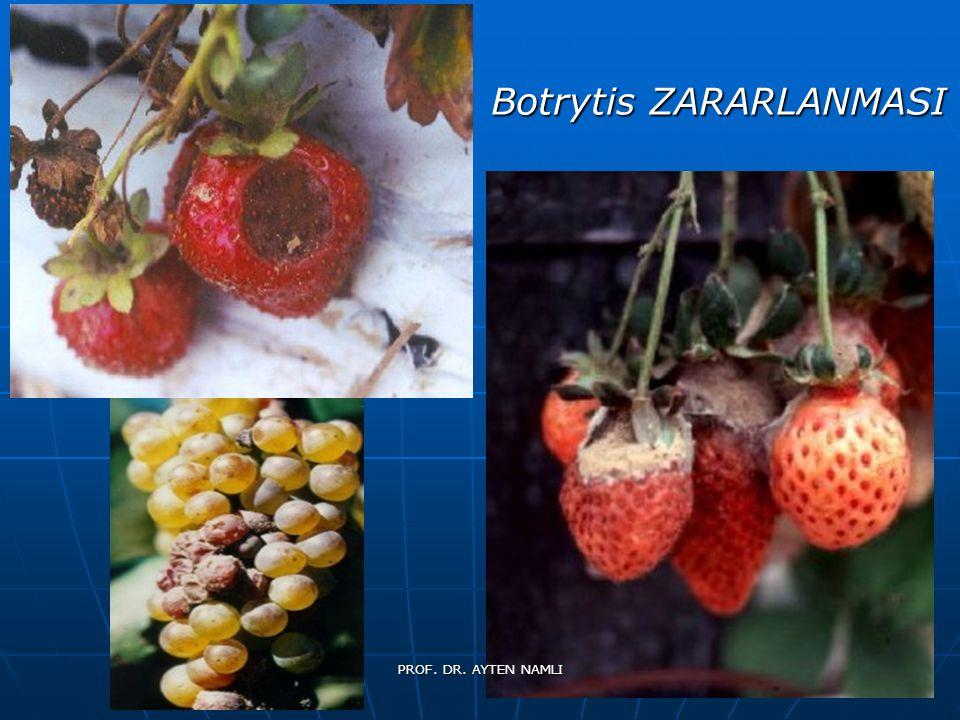 Botrytis ZARARLANMASI PROF. DR. AYTEN NAMLI