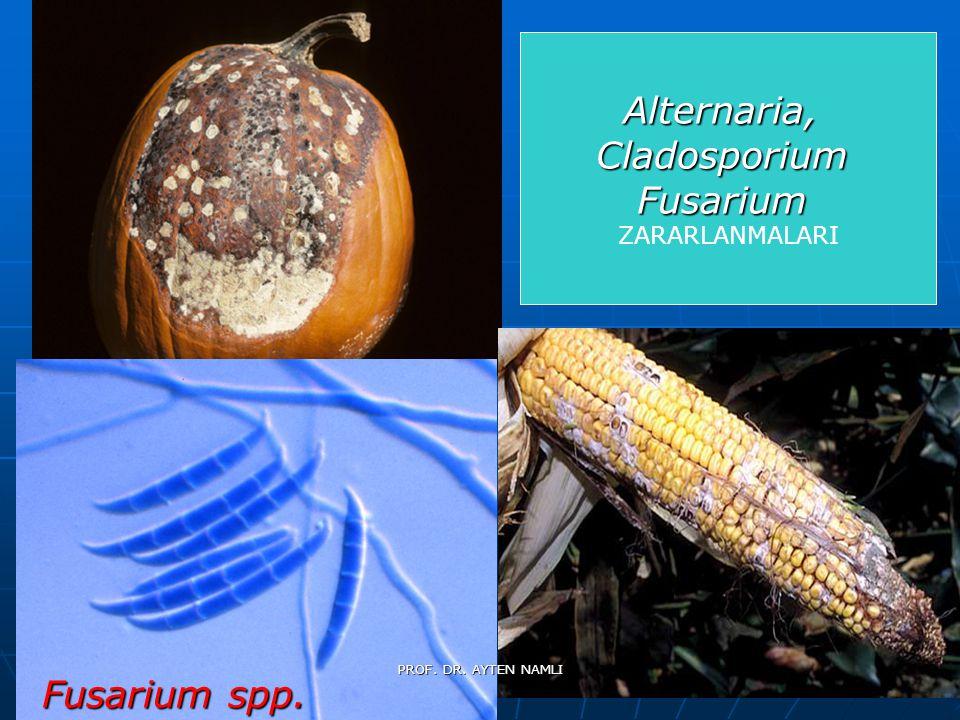 Alternaria,CladosporiumFusarium ZARARLANMALARI Fusarium spp. PROF. DR. AYTEN NAMLI