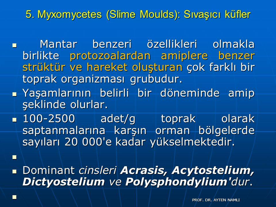 5. Myxomycetes (Slime Moulds): Sıvaşıcı küfler Mantar benzeri özellikleri olmakla birlikte protozoalardan amiplere benzer strüktür ve hareket oluştura