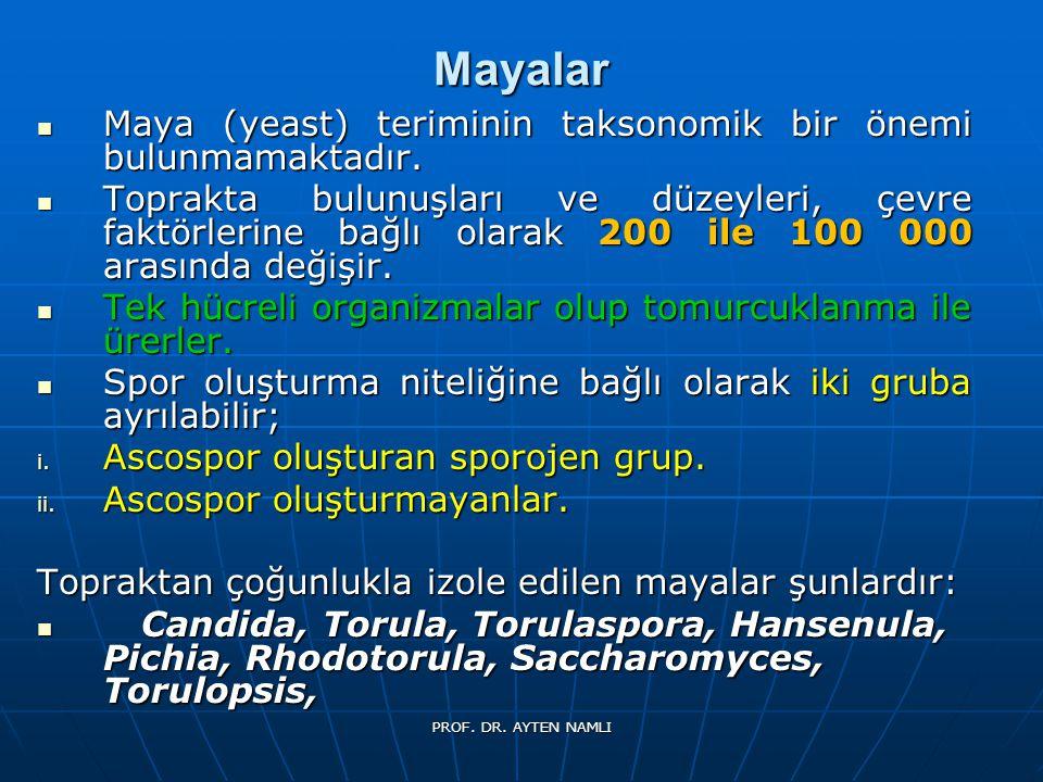 Mayalar Maya (yeast) teriminin taksonomik bir önemi bulunmamaktadır. Maya (yeast) teriminin taksonomik bir önemi bulunmamaktadır. Toprakta bulunuşları