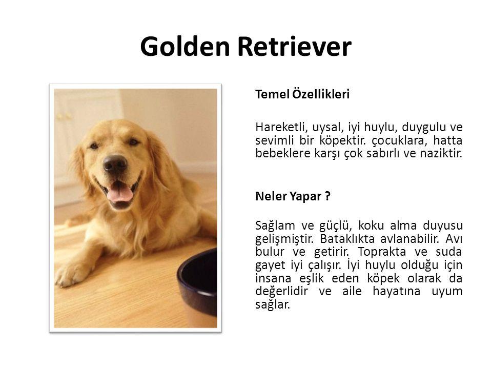 Golden Retriever Temel Özellikleri Hareketli, uysal, iyi huylu, duygulu ve sevimli bir köpektir. çocuklara, hatta bebeklere karşı çok sabırlı ve nazik