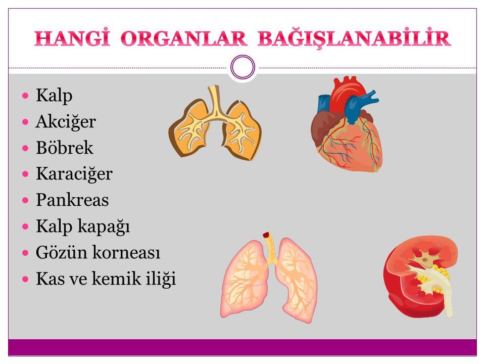 Kalp Akciğer Böbrek Karaciğer Pankreas Kalp kapağı Gözün korneası Kas ve kemik iliği