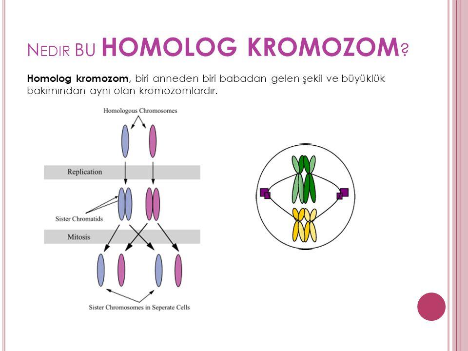 N EDIR BU HOMOLOG KROMOZOM ? Homolog kromozom, biri anneden biri babadan gelen şekil ve büyüklük bakımından aynı olan kromozomlardır.