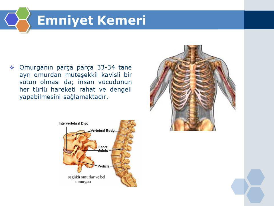 Emniyet Kemeri  Omurganın parça parça 33-34 tane ayrı omurdan müteşekkil kavisli bir sütun olması da; insan vücudunun her türlü hareketi rahat ve dengeli yapabilmesini sağlamaktadır.