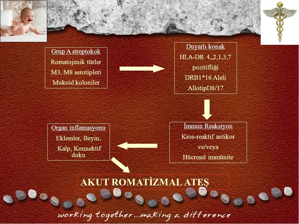 Grup A streptokok Romatojenik türler M3, M8 serotipleri Mukoid koloniler Duyarlı konak HLA-DR 4,,2,1,3,7 pozitifliği DRB1*16 Aleli AllotipD8/17 Organ inflamasyonu Eklemler, Beyin, Kalp, Konnektif doku İmmun Reaksiyon Kros-reaktif antikor ve/veya Hücresel immünite AKUT ROMATİZMAL ATEŞ