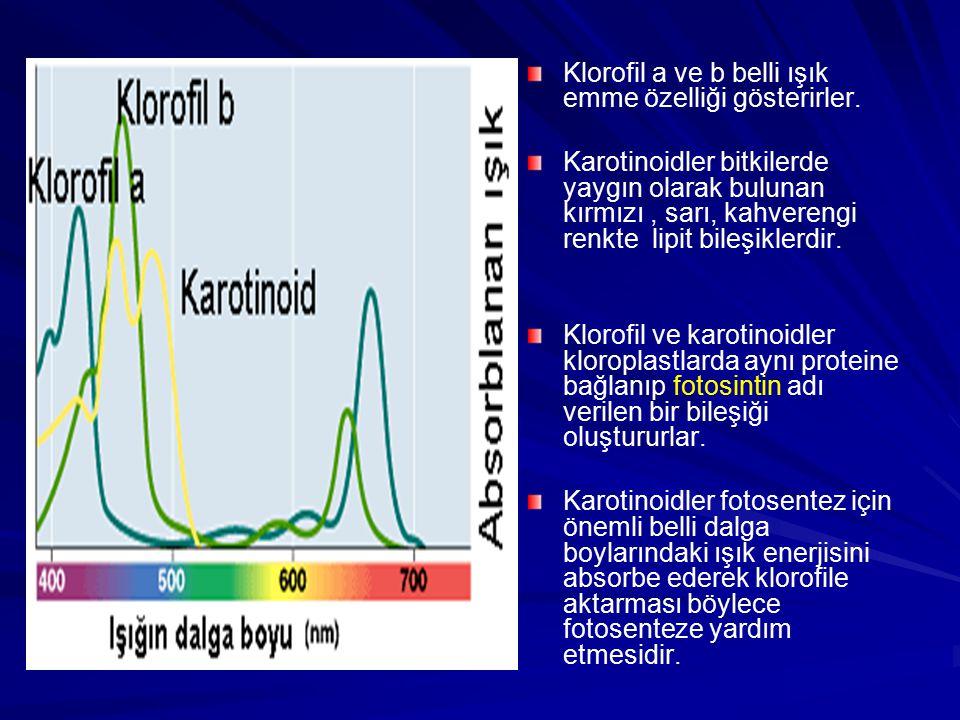 Klorofil a ve b belli ışık emme özelliği gösterirler. Karotinoidler bitkilerde yaygın olarak bulunan kırmızı, sarı, kahverengi renkte lipit bileşikler