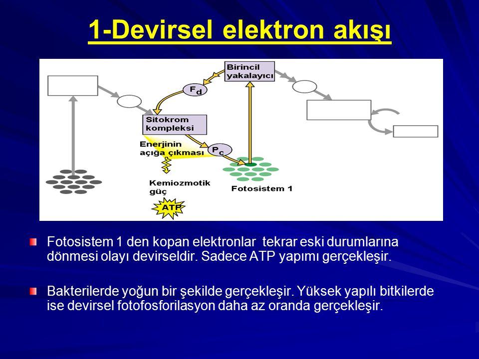 1-Devirsel elektron akışı Fotosistem 1 den kopan elektronlar tekrar eski durumlarına dönmesi olayı devirseldir. Sadece ATP yapımı gerçekleşir. Bakteri
