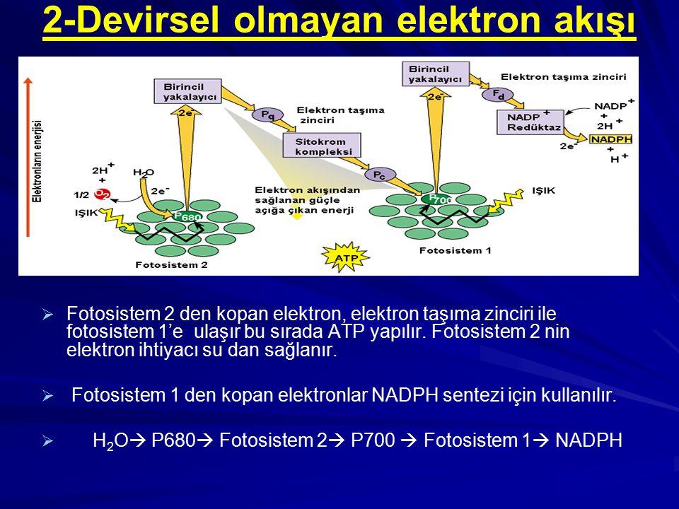 2-Devirsel olmayan elektron akışı   Fotosistem 2 den kopan elektron, elektron taşıma zinciri ile fotosistem 1'e ulaşır bu sırada ATP yapılır. Fotosi