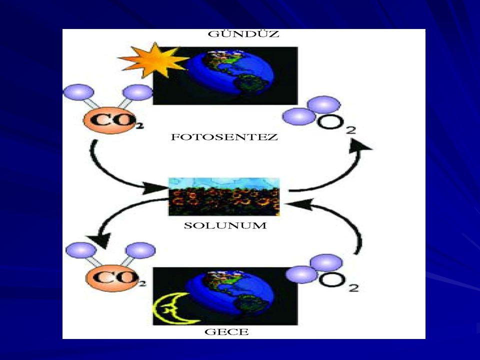 FOTOSENTEZ KLOROFİL IŞIK Glikoz 6 CO 2 + 6 H2O6 H2O Işık enerjisinin kullanılarak organik bileşiklerin üretilmesidir.