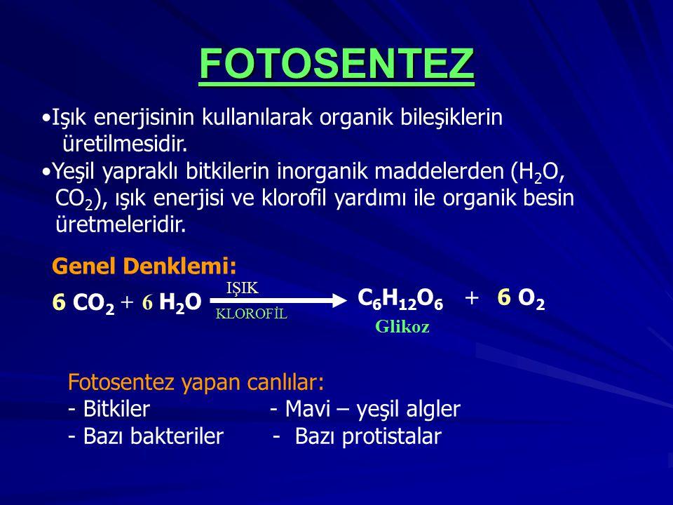 FOTOSENTEZ KLOROFİL IŞIK Glikoz 6 CO 2 + 6 H2O6 H2O Işık enerjisinin kullanılarak organik bileşiklerin üretilmesidir. Yeşil yapraklı bitkilerin inorga
