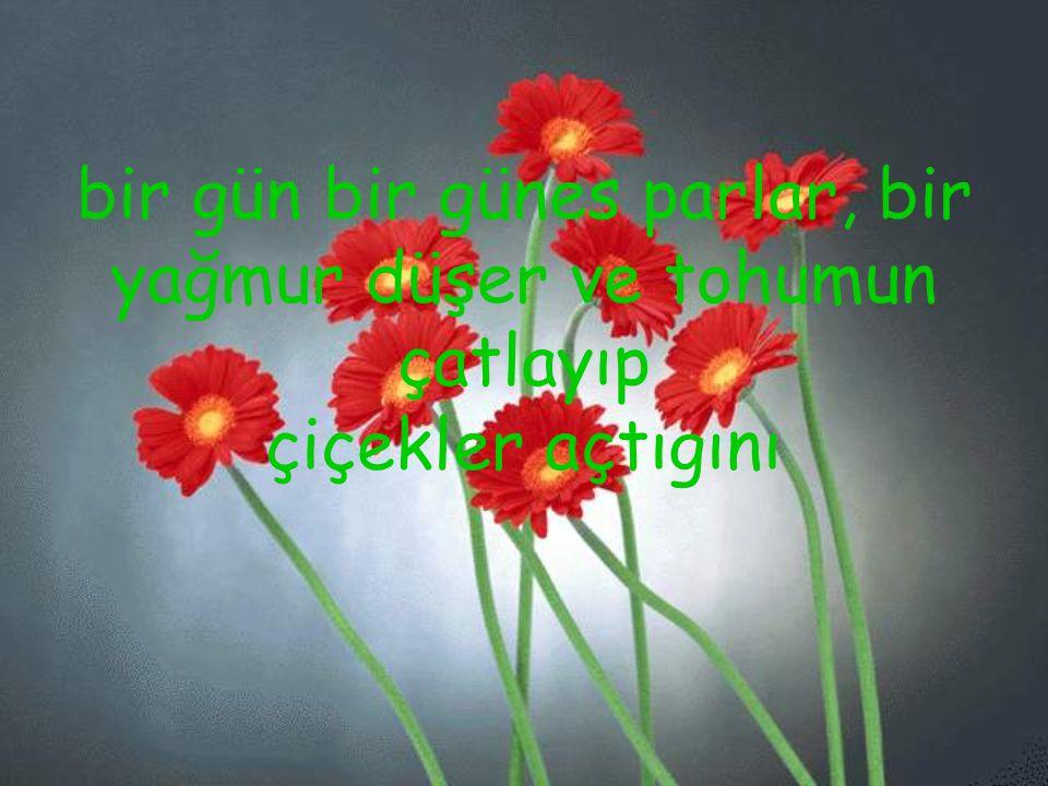 bir gün bir günes parlar, bir yağmur düşer ve tohumun çatlayıp çiçekler açtıgını