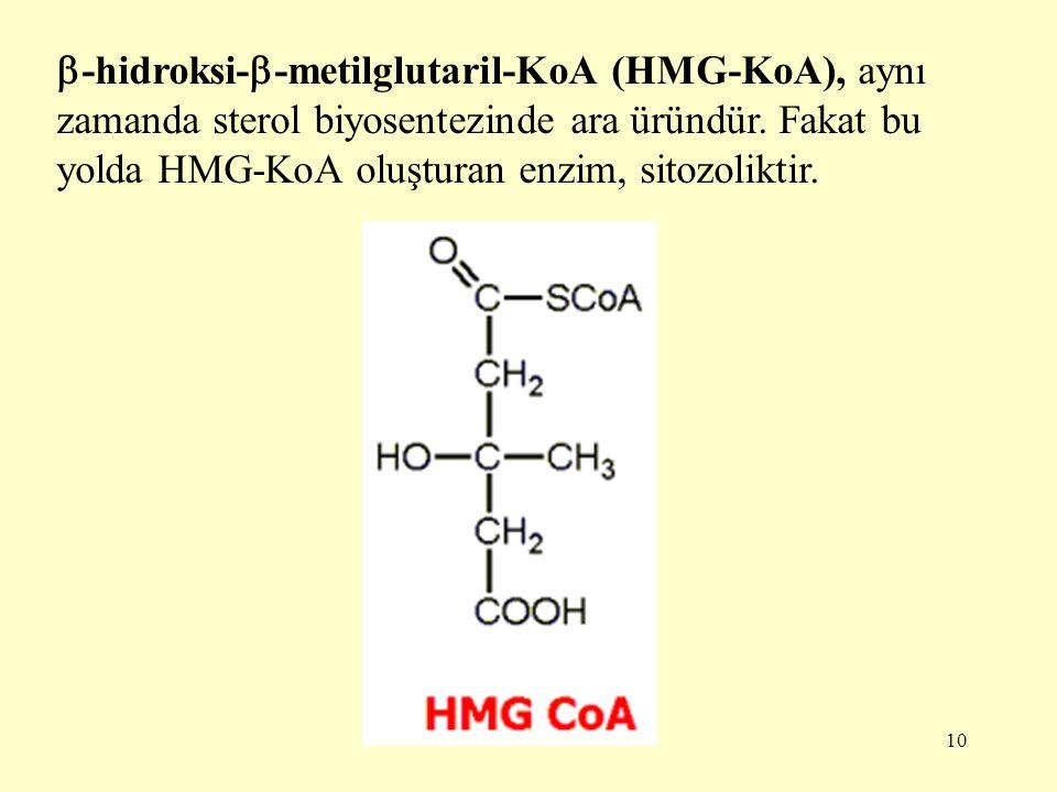 10  -hidroksi-  -metilglutaril-KoA (HMG-KoA), aynı zamanda sterol biyosentezinde ara üründür. Fakat bu yolda HMG-KoA oluşturan enzim, sitozoliktir.
