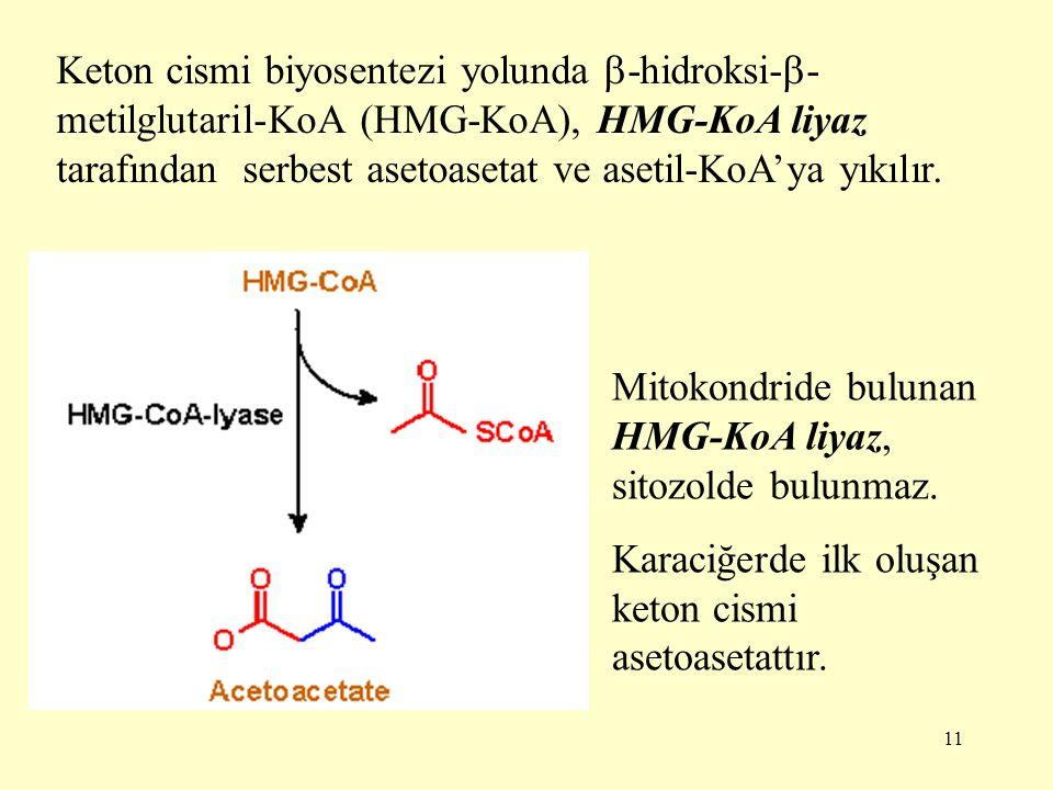 11 Keton cismi biyosentezi yolunda  -hidroksi-  - metilglutaril-KoA (HMG-KoA), HMG-KoA liyaz tarafından serbest asetoasetat ve asetil-KoA'ya yıkılır