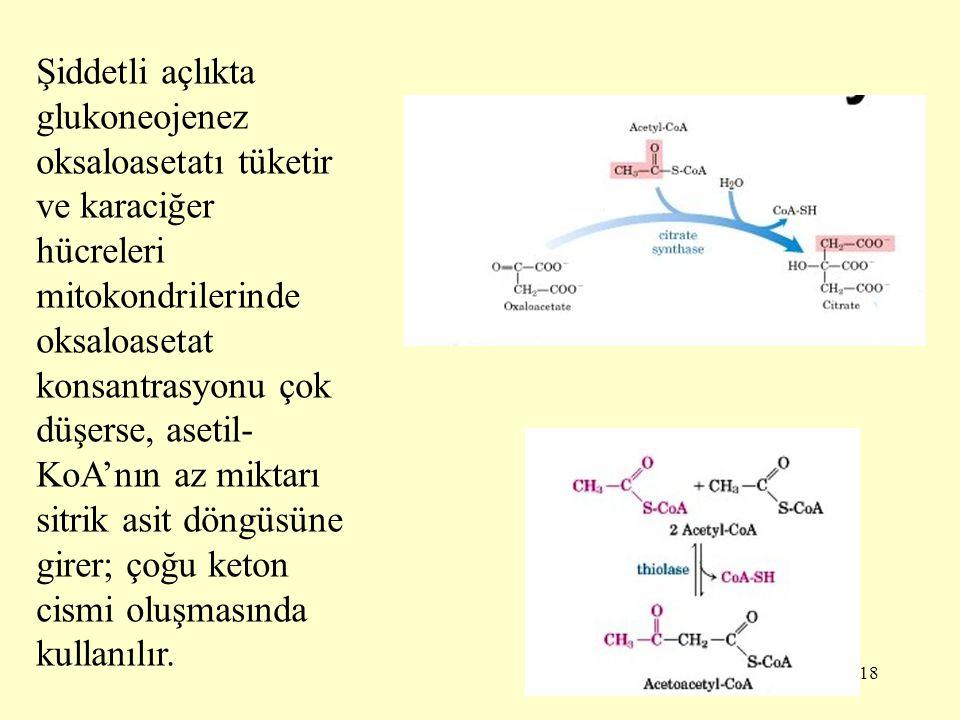 18 Şiddetli açlıkta glukoneojenez oksaloasetatı tüketir ve karaciğer hücreleri mitokondrilerinde oksaloasetat konsantrasyonu çok düşerse, asetil- KoA'