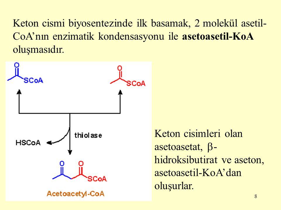 8 Keton cismi biyosentezinde ilk basamak, 2 molekül asetil- CoA'nın enzimatik kondensasyonu ile asetoasetil-KoA oluşmasıdır. Keton cisimleri olan aset
