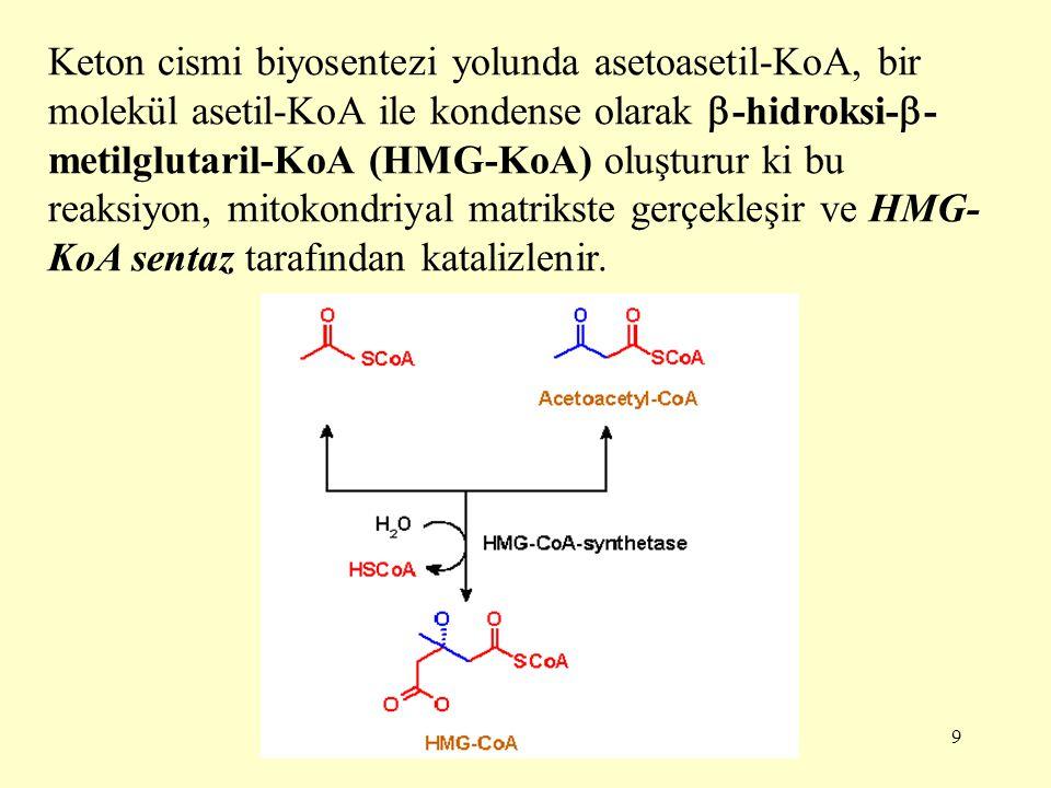 9 Keton cismi biyosentezi yolunda asetoasetil-KoA, bir molekül asetil-KoA ile kondense olarak  -hidroksi-  - metilglutaril-KoA (HMG-KoA) oluşturur k