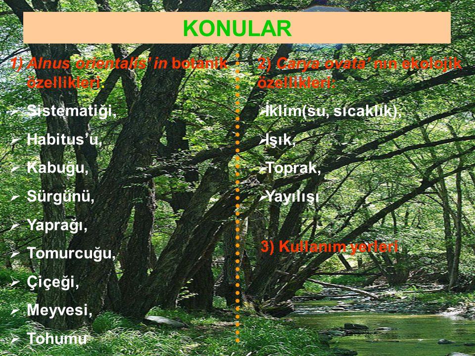 KONULAR 1)Alnus orientalis' in botanik özellikleri:  Sistematiği,  Habitus'u,  Kabuğu,  Sürgünü,  Yaprağı,  Tomurcuğu,  Çiçeği,  Meyvesi,  To