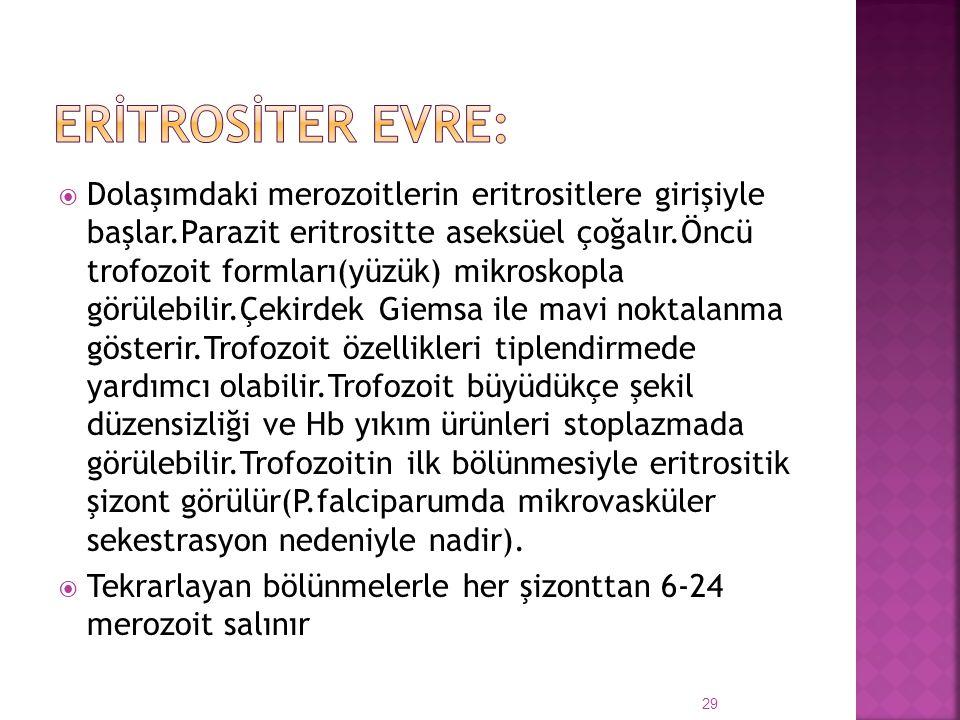  Dolaşımdaki merozoitlerin eritrositlere girişiyle başlar.Parazit eritrositte aseksüel çoğalır.Öncü trofozoit formları(yüzük) mikroskopla görülebilir
