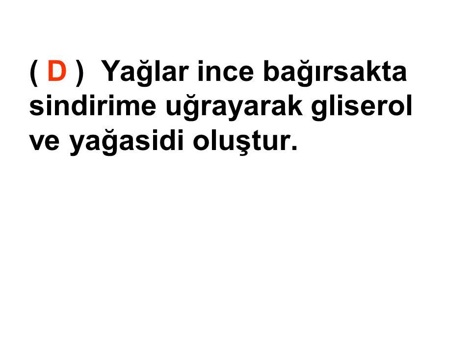 ( D ) Yağlar ince bağırsakta sindirime uğrayarak gliserol ve yağasidi oluştur.