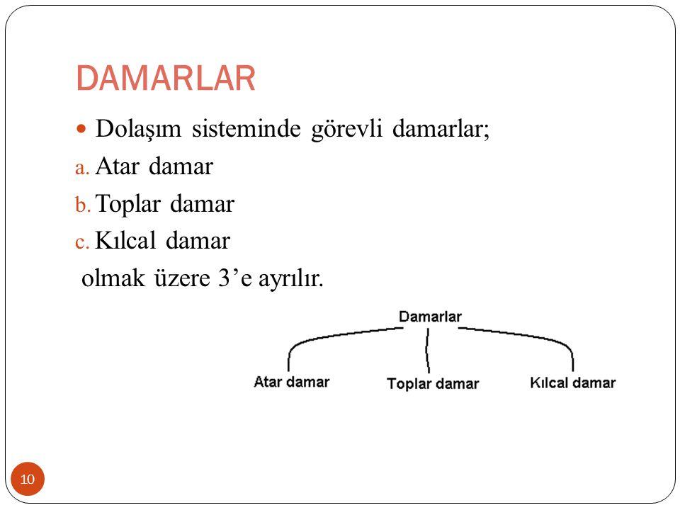 DAMARLAR 10 Dolaşım sisteminde görevli damarlar; a. Atar damar b. Toplar damar c. Kılcal damar olmak üzere 3'e ayrılır.