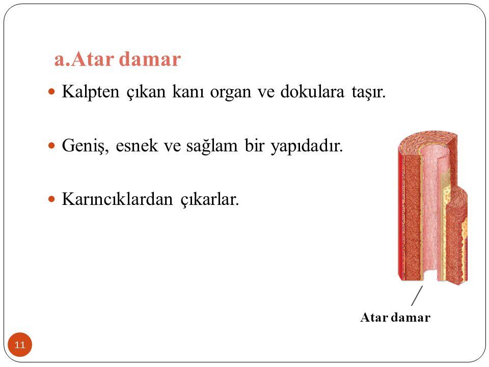 a.Atar damar 11 Kalpten çıkan kanı organ ve dokulara taşır. Geniş, esnek ve sağlam bir yapıdadır. Karıncıklardan çıkarlar. Atar damar