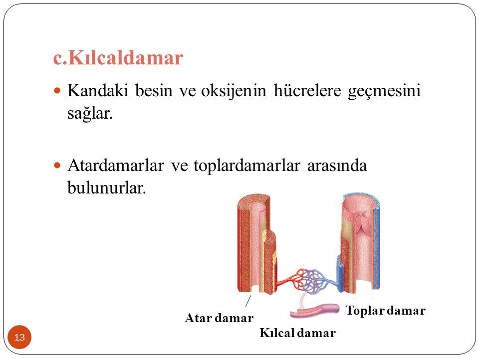 c.Kılcaldamar 13 Kandaki besin ve oksijenin hücrelere geçmesini sağlar. Atardamarlar ve toplardamarlar arasında bulunurlar. Atar damar Toplar damar Kı