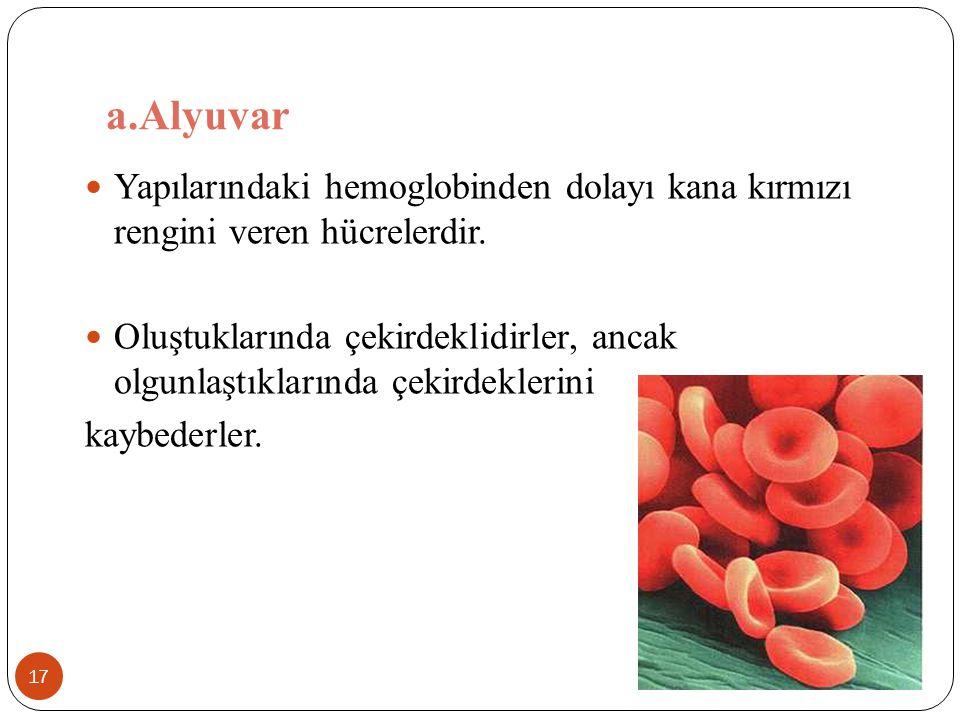 a.Alyuvar 17 Yapılarındaki hemoglobinden dolayı kana kırmızı rengini veren hücrelerdir. Oluştuklarında çekirdeklidirler, ancak olgunlaştıklarında çeki