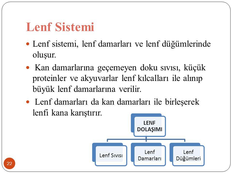 Lenf Sistemi 22 Lenf sistemi, lenf damarları ve lenf düğümlerinde oluşur. Kan damarlarına geçemeyen doku sıvısı, küçük proteinler ve akyuvarlar lenf k