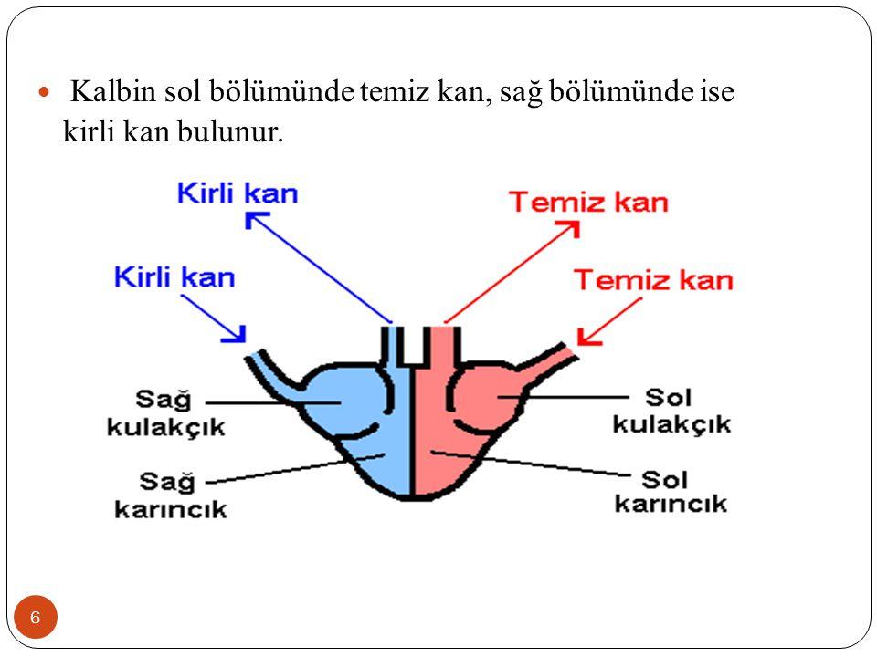 a.Alyuvar 17 Yapılarındaki hemoglobinden dolayı kana kırmızı rengini veren hücrelerdir.