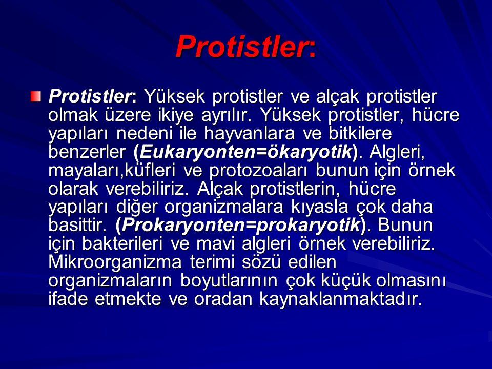 Protistler: Protistler: Yüksek protistler ve alçak protistler olmak üzere ikiye ayrılır. Yüksek protistler, hücre yapıları nedeni ile hayvanlara ve bi