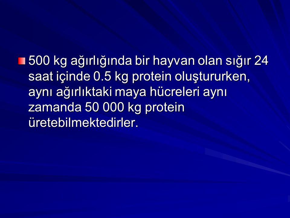 500 kg ağırlığında bir hayvan olan sığır 24 saat içinde 0.5 kg protein oluştururken, aynı ağırlıktaki maya hücreleri aynı zamanda 50 000 kg protein ür