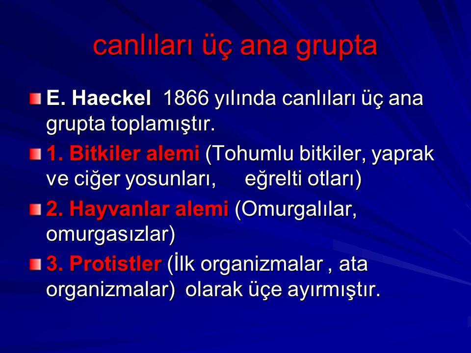 canlıları üç ana grupta E. Haeckel 1866 yılında canlıları üç ana grupta toplamıştır. 1. Bitkiler alemi (Tohumlu bitkiler, yaprak ve ciğer yosunları, e