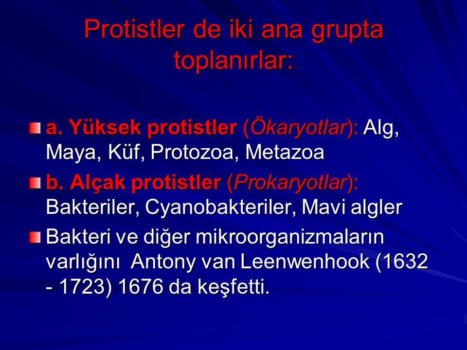 Protistler de iki ana grupta toplanırlar: a. Yüksek protistler (Ökaryotlar): Alg, Maya, Küf, Protozoa, Metazoa b. Alçak protistler (Prokaryotlar): Bak