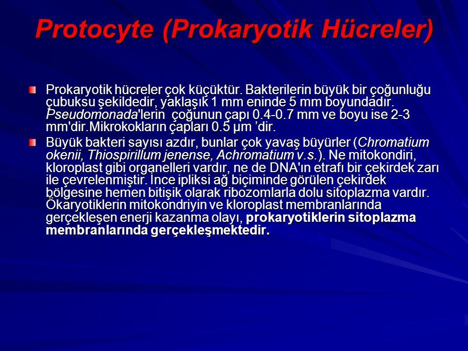 Protocyte (Prokaryotik Hücreler) Prokaryotik hücreler çok küçüktür. Bakterilerin büyük bir çoğunluğu çubuksu şekildedir, yaklaşık 1 mm eninde 5 mm boy