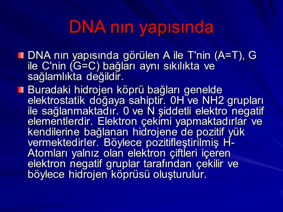 DNA nın yapısında DNA nın yapısında görülen A ile T'nin (A=T), G ile C'nin (G=C) bağları aynı sıkılıkta ve sağlamlıkta değildir. Buradaki hidrojen köp