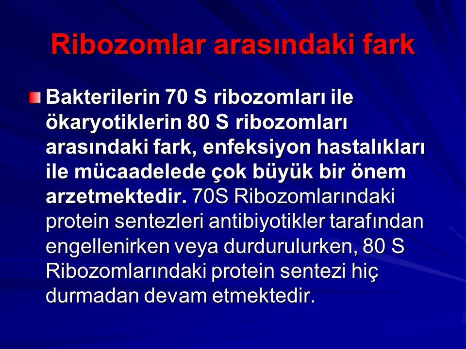 Ribozomlar arasındaki fark Bakterilerin 70 S ribozomları ile ökaryotiklerin 80 S ribozomları arasındaki fark, enfeksiyon hastalıkları ile mücaadelede