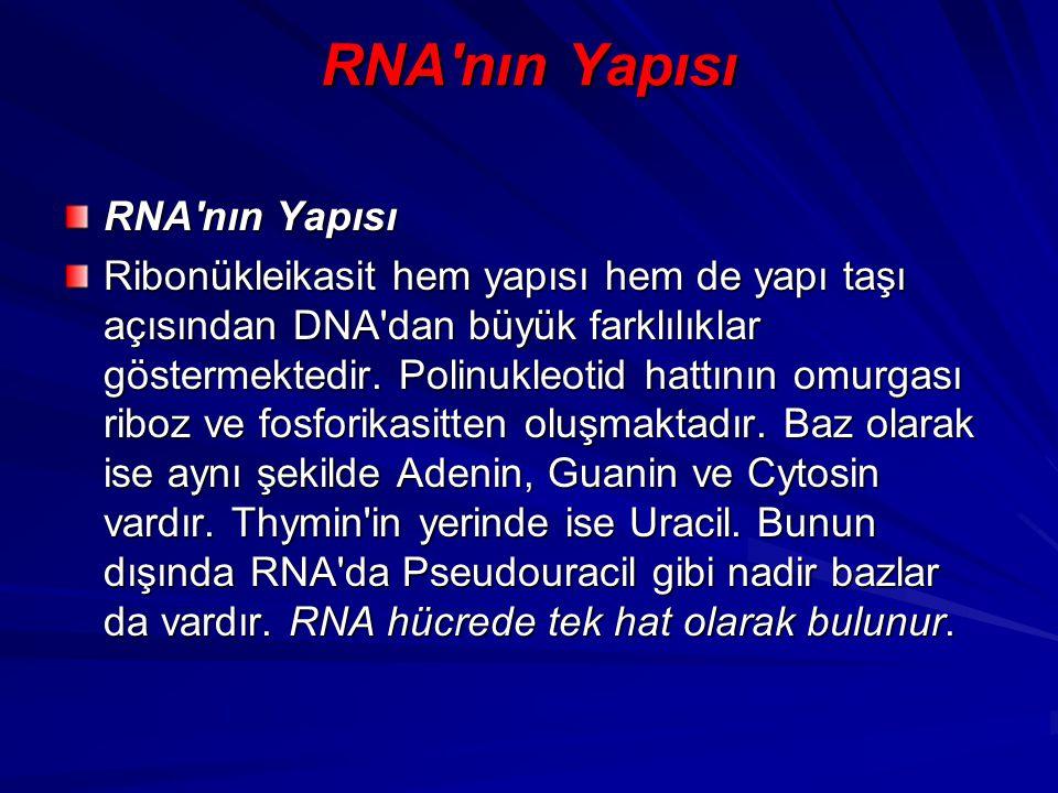 RNA'nın Yapısı Ribonükleikasit hem yapısı hem de yapı taşı açısından DNA'dan büyük farklılıklar göstermektedir. Polinukleotid hattının omurgası riboz