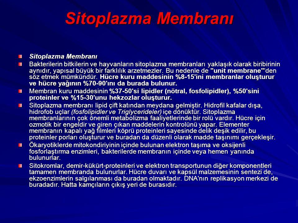Sitoplazma Membranı Bakterilerin bitkilerin ve hayvanların sitoplazma membranları yaklaşık olarak biribirinin aynıdır, yapısal büyük bir farklılık arz