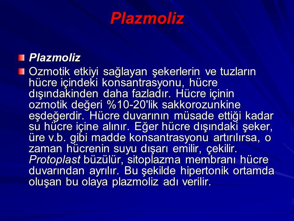 Plazmoliz Plazmoliz Ozmotik etkiyi sağlayan şekerlerin ve tuzların hücre içindeki konsantrasyonu, hücre dışındakinden daha fazladır. Hücre içinin ozmo