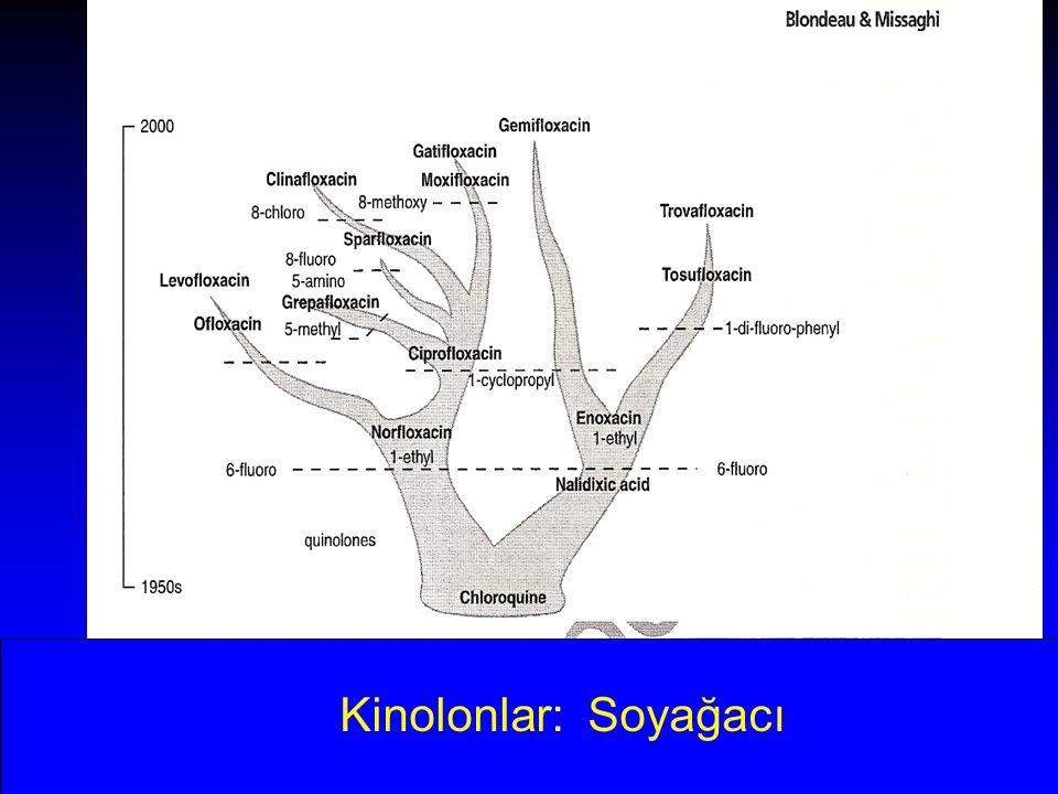 Kinolonlar: Soyağacı