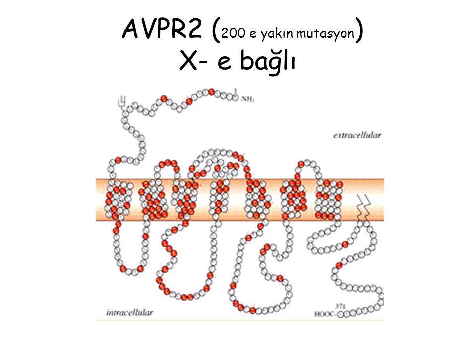 AVPR2 ( 200 e yakın mutasyon ) X- e bağlı