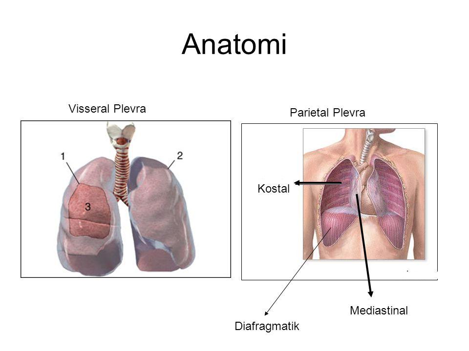 Anatomi Visseral Plevra Parietal Plevra Mediastinal Kostal Diafragmatik