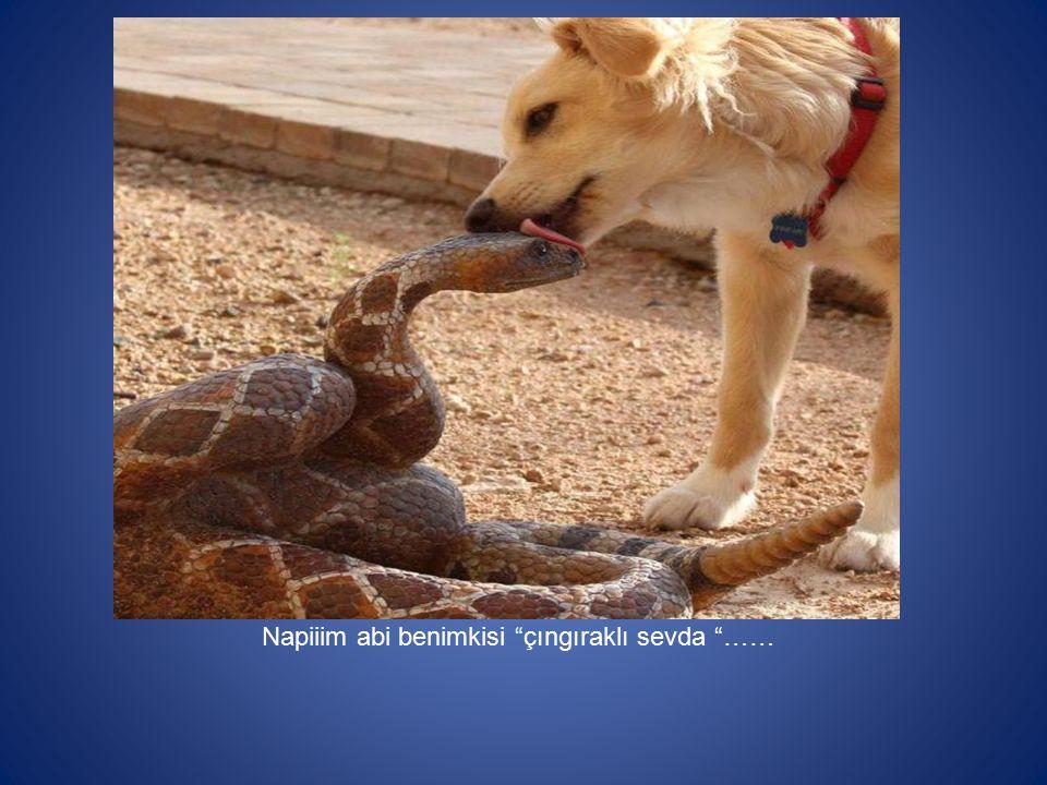 """Napiiim abi benimkisi """"çıngıraklı sevda """"……"""
